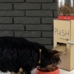 Man Builds A DIY Dog Food Dispenser Out Of Cardboard