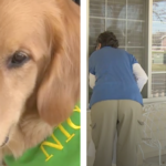 Dog Provides Comfort Through The Windows At Senior Living Center