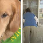 Dog Provides Comfort Through The Windows At Senior Living Center