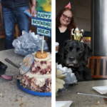 Explosive Detecting K9 Officer Was Given The Most Adorable Retirement Party