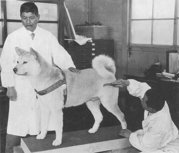 Hachi's remains tended to by professionals - Cesar's Way
