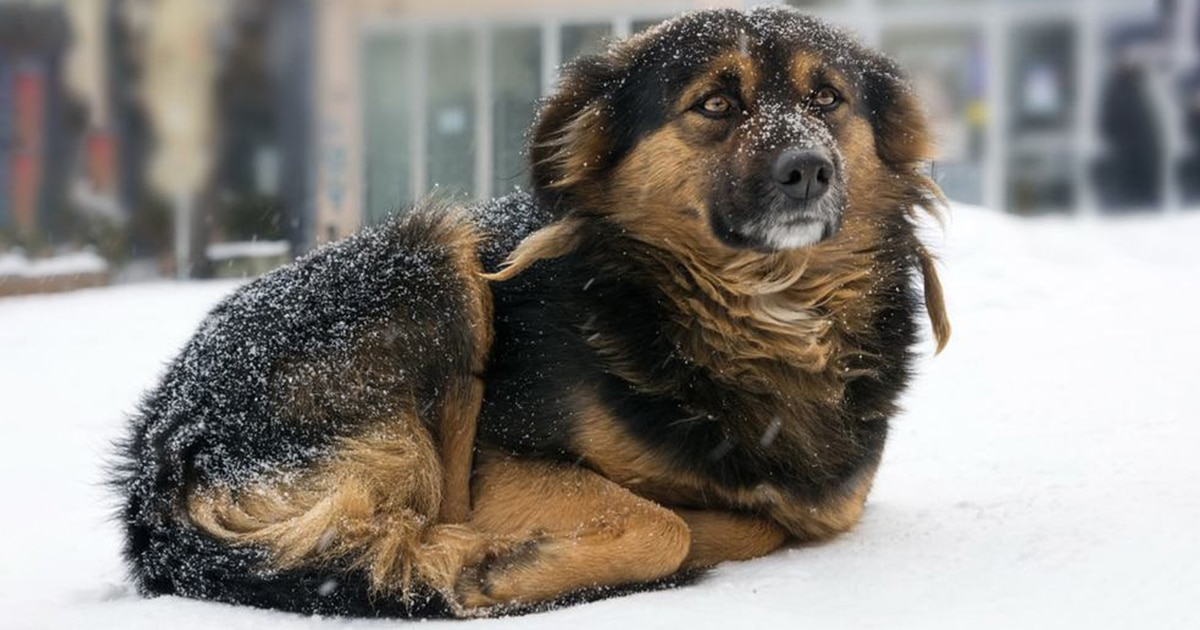 Owners That Leave Their Dogs Outside In Extreme Weather Conditions Could Now Go To Jail