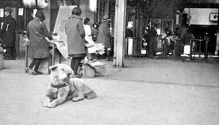 The True Story Of Hachiko, A Loyal Dog That Waited Over 9 Years At The Train Station For His Deceased Owner