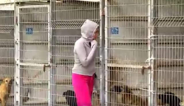 Woman Couldn't Decide Which Dogs To Save So She Bought The Entire Shelter