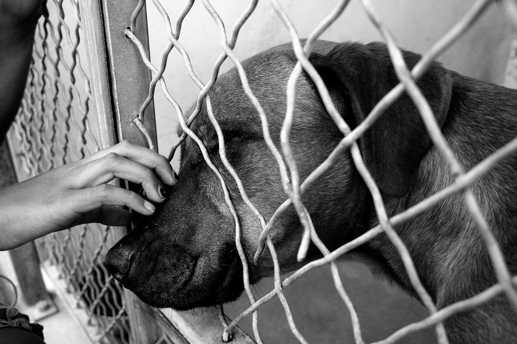 Dog at shelter