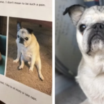 Dog Mom Posts Cutest Apology Note For Neighbors About Her Noisy Senior Pug