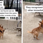 Dog Siblings Separated At The Shelter Have A Chance Reunion At The Park