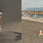 Dog 'Ruined' Every Frame Of Street View By Chasing The Google Maps Car