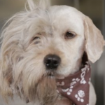 Homeless Dog Got A Makeover And It Saved His Life