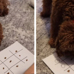 Owner Plays Tic Tac Toe With His Dog During Quarantine