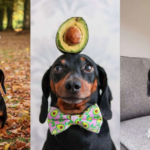 Dog Becomes Instagram-Famous For Balancing Random Objects On His Head