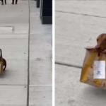 Good Boy Caught On Camera Bringing Takeout Food Home For His Family