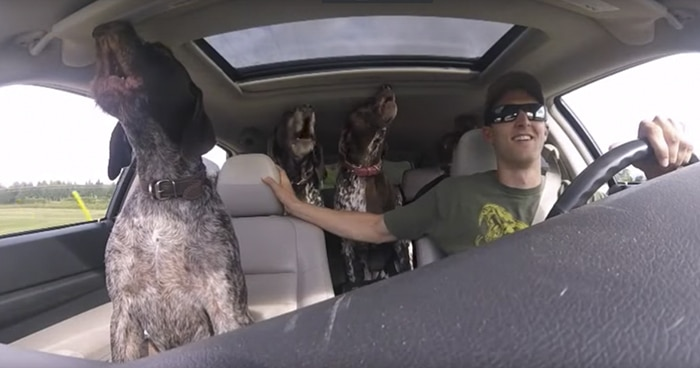 Dogs Freak Out When They Realize Their Human Is Taking Them To The Park