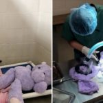 Shelter Dog 'Investigated' For Attacking His Stuffed Purple Hippo