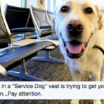 What To Do If A Service Dog Approaches You Without Its Handler