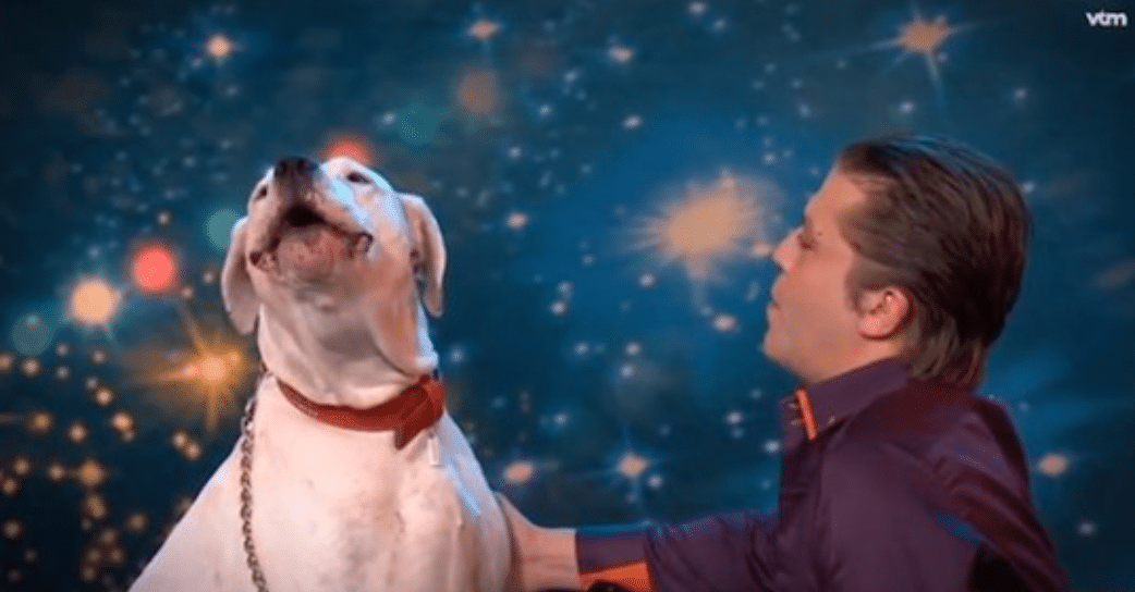 Dog Sings Whitney Houston's Hit 'I Will Always Love You' On TV Talent Show