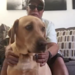 Nurse Takes Care Of Blind Veteran's Guide Dog After He's Admitted To The Hospital