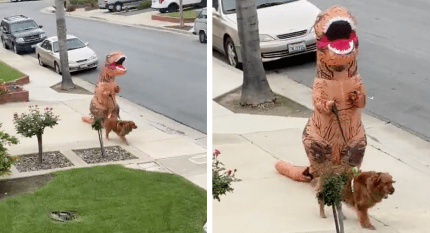Owner Dresses In A T-Rex Costume To Safely Walk The Dog