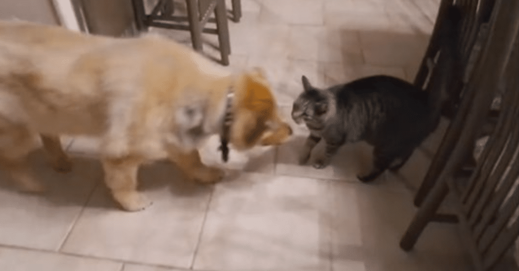 Cat Gets Emotional When She Reunites With Her Blind Dog Buddy