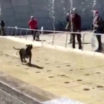 Dog Has A Field Day Running In The Museum Fountain