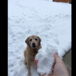 Dog Goes Completely Bonkers When He Loses His Snowball In The Snow