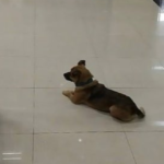 Loyal Dog Waited In The Lobby For 3 Months At The Hospital After Owner's Death