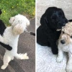 Dog Reunites With His Long-Lost Sister From The Same Litter At The Dog Park