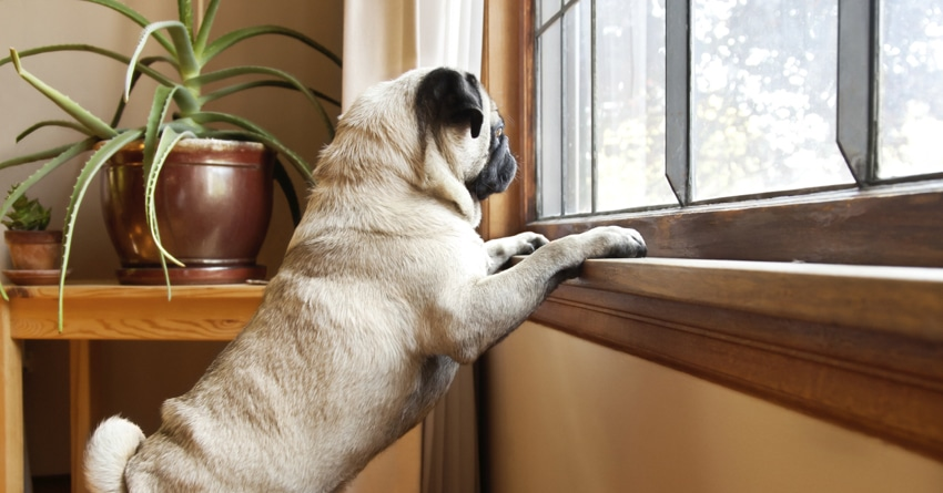 Cesar Explains How To Fix Separation Anxiety With Your Dog ...
