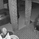 Brave Tiny Dog Chases Burglars Off The Property