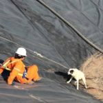 Workers Rescue Dog And Her Puppy After They Get Trapped In A Water Pit