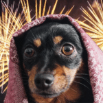 How To Prepare Your Pets For The Fourth Of July Fireworks