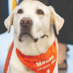 Service Dog Gets Honorary Diploma