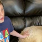 The Internet Helps Pay The Vet Bills For A Service Dog To A Boy With Autism