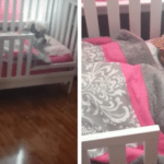 Mom Walks Into Her Child's Bedroom To Find The Dog Sleeping In The Crib