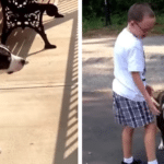 Dog Waits All Day For Her Human To Get Home From School