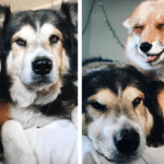 Rescue Dog Becomes Best Friends With Smiley Fox