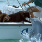 Dolphin Leaps Out Of The Water To Give A Dog A Kiss