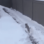 Man Digs The Ultimate Obstacle Course For His Dog In The Snow