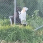 Man Freaks Out When He Spots Two Dogs Sitting In Chairs Like Humans