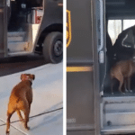 Dog Eagerly Waits Each Day For The UPS Driver To Arrive