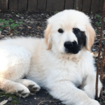 Dog Was Born With A Black Birthmark On The Side Of His Face