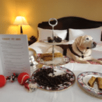 Man Hesitantly Asks Hotel If He Can Bring His Dog And They Go All Out
