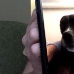 Nurse Reunites With Her Dog Over FaceTime While Being Quarantined