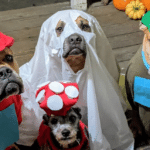 Four Rescue Dogs Dress Up As Different Characters For Halloween