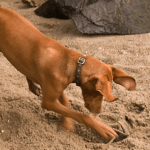Why Do Dogs Bury Things In The Ground?
