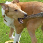 How To Know If Your Dog Has Limber Tail