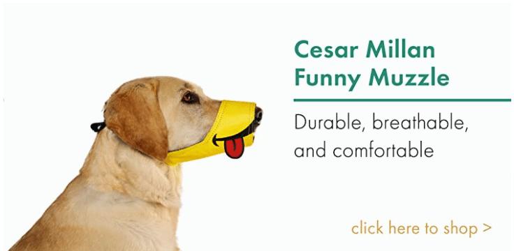 Funny Muzzle Cesar Millan