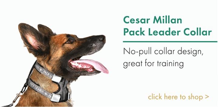 Pack Leader Collar Cesar Millan