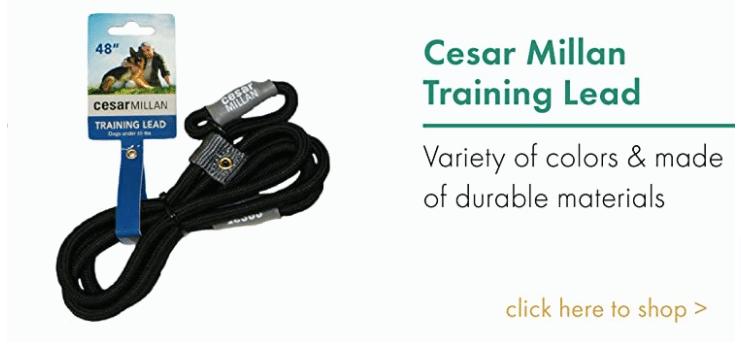 Training Lead Cesar Millan