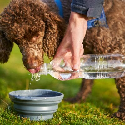 A dog receiving a drink of water while out on a long walk.